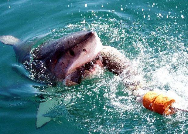 Gansbaai, África do Sul: essa região é conhecida como a Capital do tubarão branco. Não à toa, está nessa lista