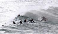 Uma cena mais que inusitada foi captada pelo fotografo Daniel Munoz nestaúltima terça-feira (25) em Sydney. Surfistas tiveram a companhia […]