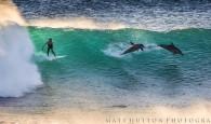 Fotógrafo Matt Hutton registra golfinhos saltando em ondas na costa oeste. Enquanto os golfinhos são conhecidos por ocasionalmente compartilhar ondas […]
