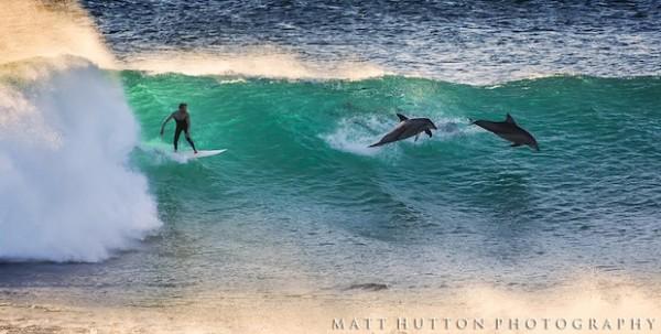 Golfinho salta ao lado de surfista na praia de Jacques Point, em Kalbarri, costa oeste da Austrália (Foto: Divulgação/Matt Hutton)