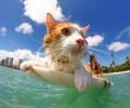Kuli é um gato que adora pegar onda em Honolulu, no Hawaí. O gatinho tinha apenas seis meses quando começou […]